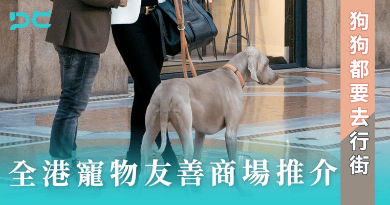 PetbleCare 寵物保險 香港 領養狗狗 領養貓貓 考慮問題 幼犬 幼貓 成犬 成貓 因素 狗保險 買寵物保險 動物保險 貓保險 比較 行街 寵物友善商場 商場 濕平 入商場 貓貓 狗狗 寵物