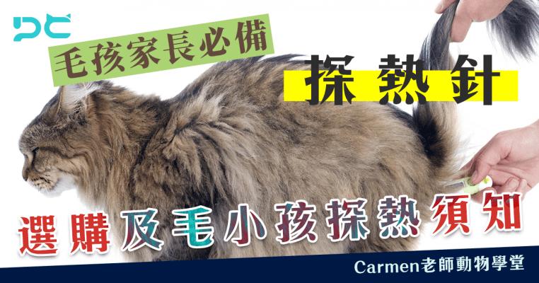 PetbleCare 寵物保險 香港 狗狗探熱 貓貓探熱 寵物探熱 探熱針 體溫探熱 選購探熱針 水銀探熱計 電子探熱計