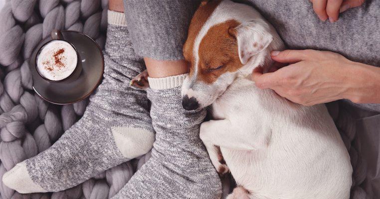 給毛孩一份終生守護 PetbleCare寵物保險