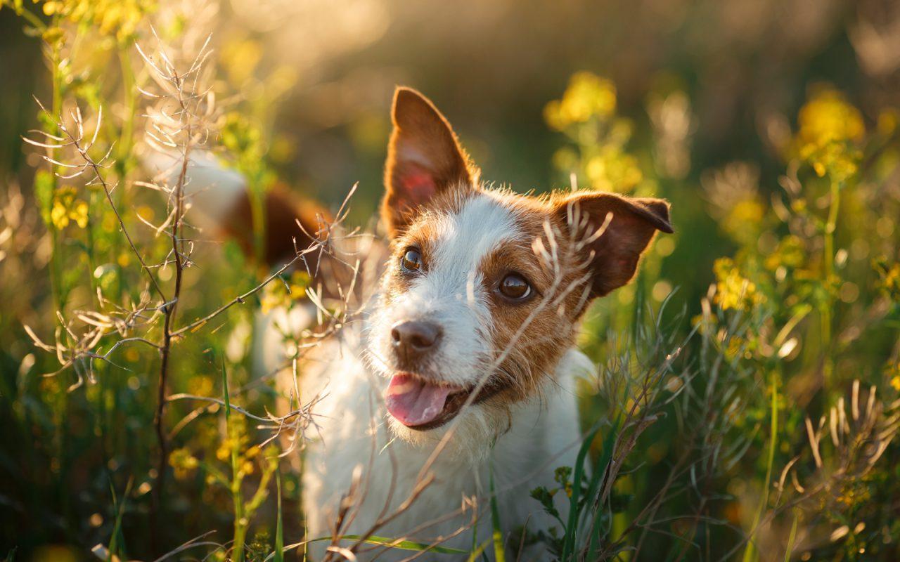 7個要買寵物保險的理由 PetbleCare 寵物保險