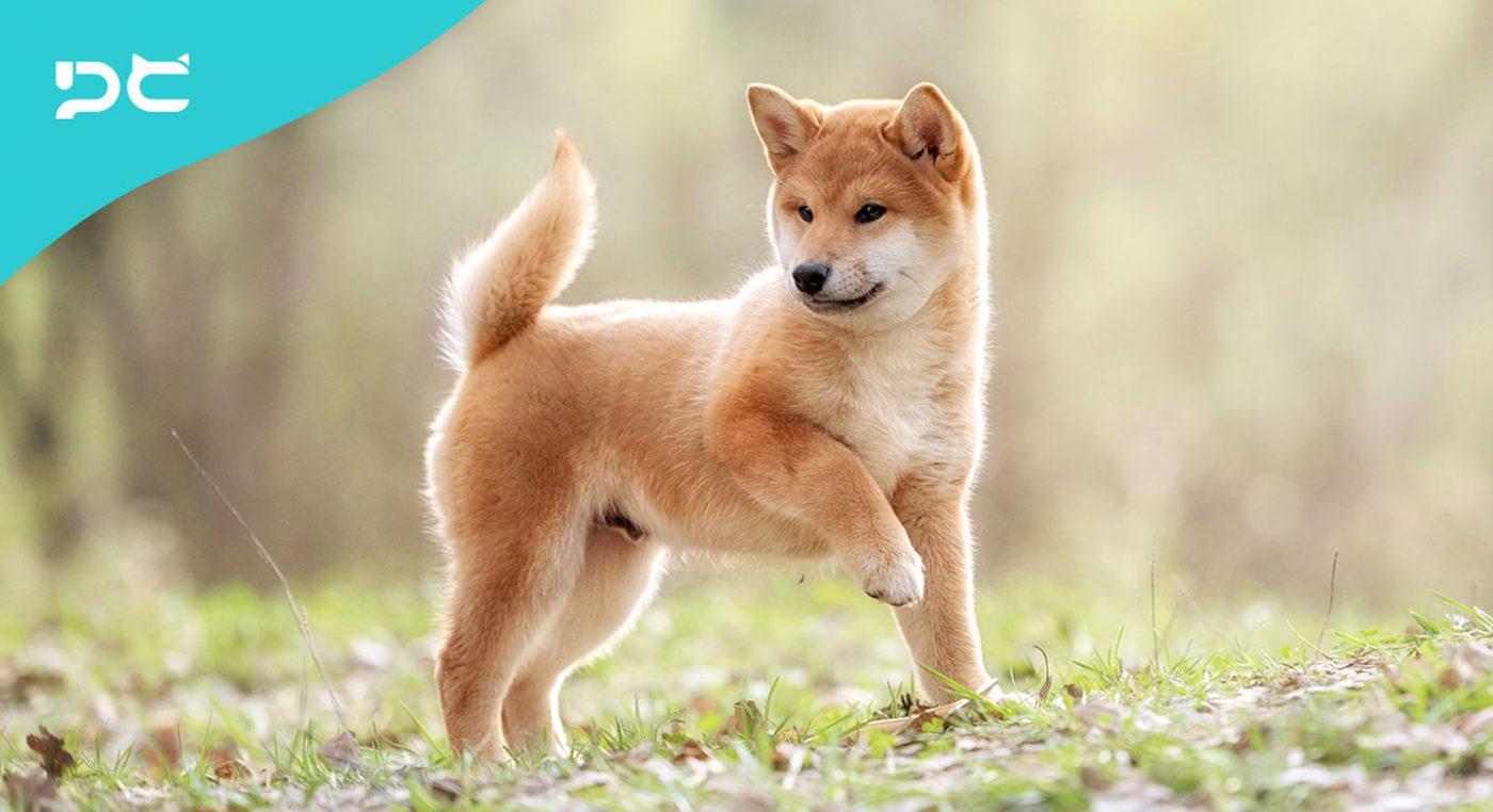 PetbleCare 寵物保險
