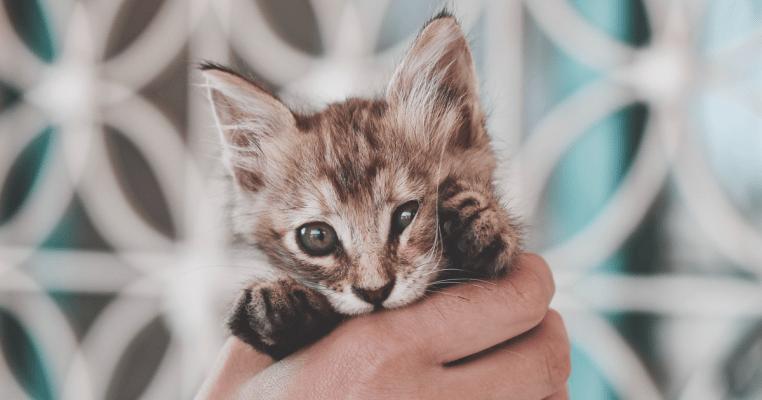 新手養貓懶人包