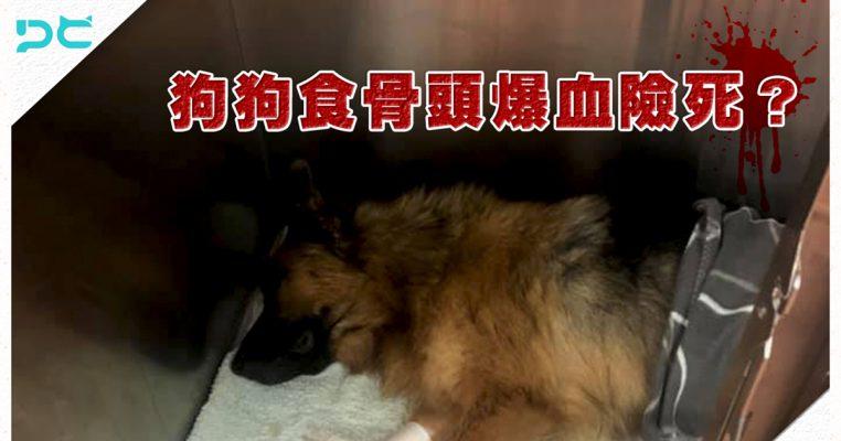 狗狗吃了骨頭後治療情況