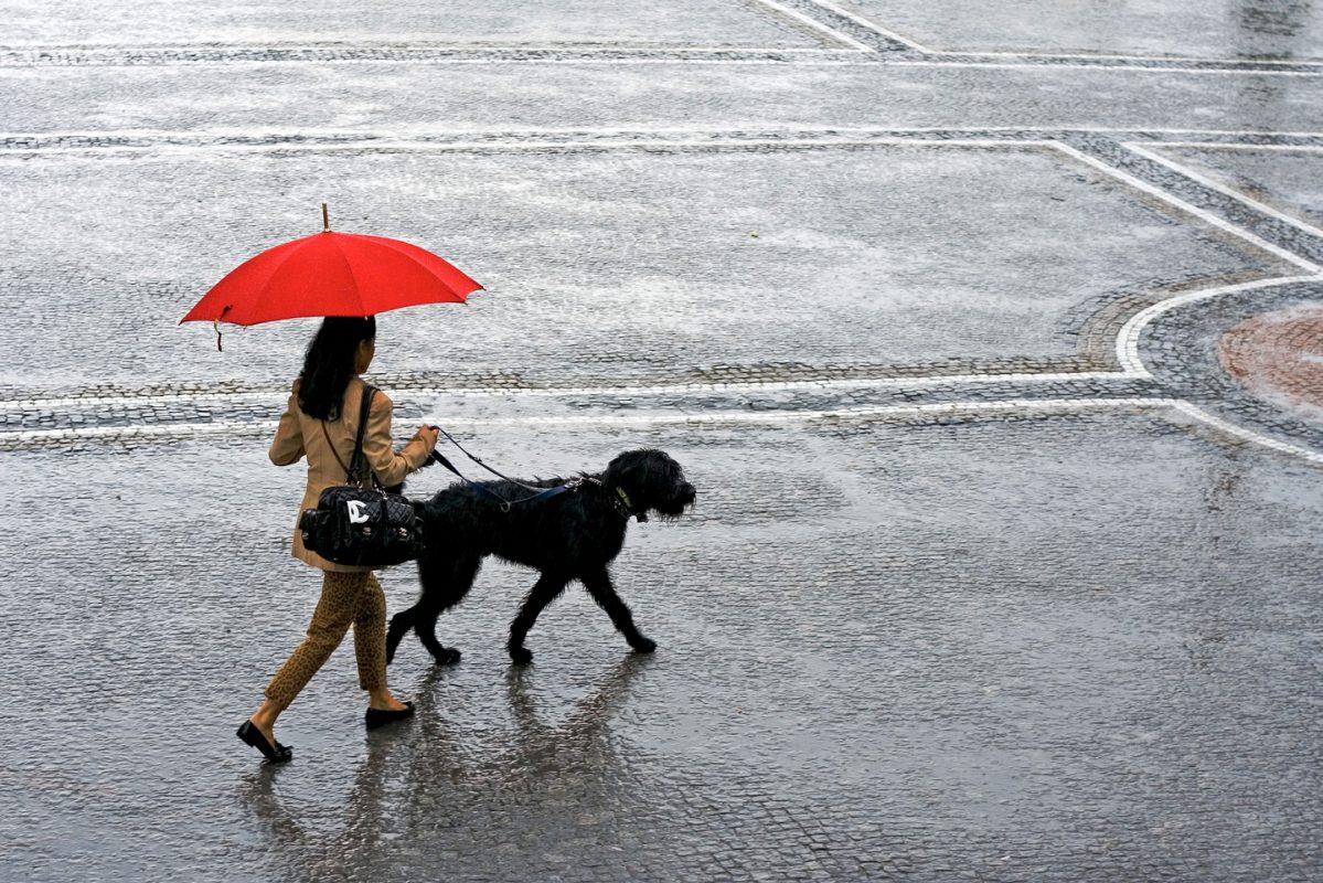 颱風雨季殺到 打風堅持放狗?4大法寶你要知 PetbleCare 寵物保險