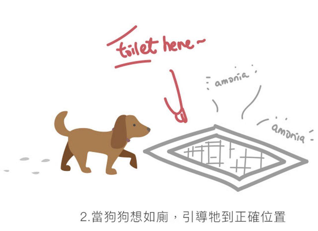 狗狗正向訓練 小便 PetbleCare 寵物保險