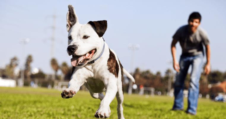 假日放狗好去處 香港免費寵物公園一覽 新界區