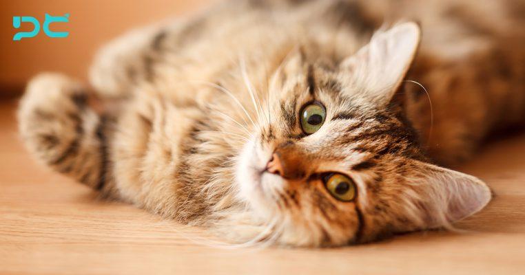 PetbleCare 寵物保險 香港 買寵物保險 貓貓 狗狗 手續 家居意外 貓咪 唔出街 安全 3大家居 致命陷阱