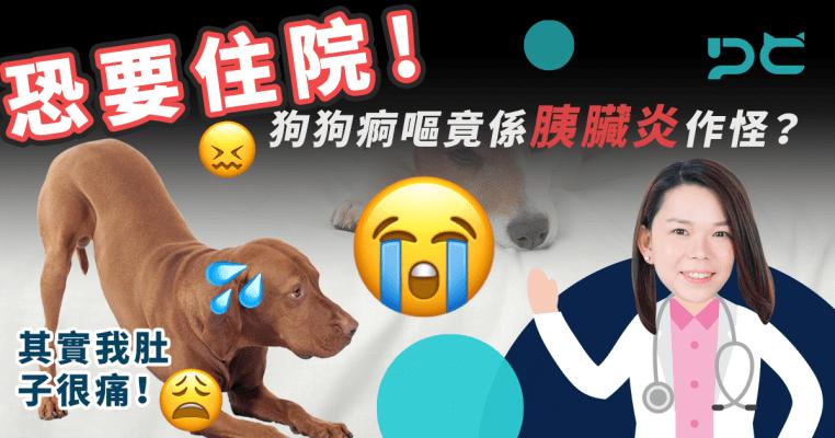 PetbleCare 寵物保險 貓貓 狗狗 住院 痾嘔 胰臟炎 獸醫