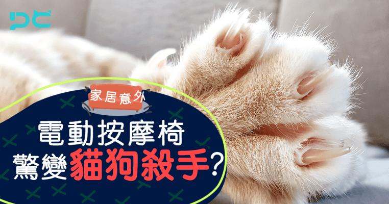PetbleCare 寵物保險 香港 買寵物保險 貓貓 狗狗 手續 家居意外 電動按摩椅 貓狗殺手 夾死貓 夾死狗