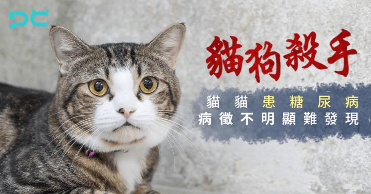 PetbleCare 寵物保險 香港 買寵物保險 貓貓 狗狗 貓狗殺手 糖尿病 病徵不明顯 糖分 意外保障 醫療疾病保障
