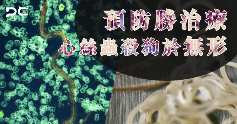 PetbleCare 寵物保險 香港 預防勝治療 心絲蟲 無形 殺狗