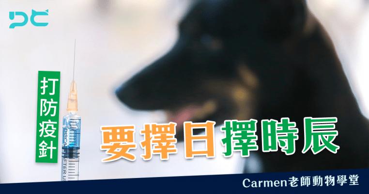 PetbleCare 寵物保險 香港 狗狗打針 貓貓打針 寵物打針 防疫針 嘔吐 痾嘔 預防針 擇日 擇時辰 睇醫生