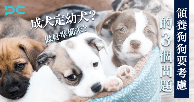 PetbleCare 寵物保險 香港 領養狗狗 考慮問題 幼犬 因素 狗保險 買寵物保險 買寵保