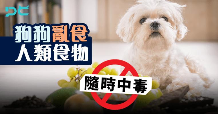 PetbleCare 寵物保險 香港 洋蔥 onions 禍從口入 唔食得 食物 人 中毒 貓貓 狗狗 寵物