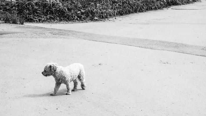 PetbleCare 寵物保險 香港 狗狗唔見咗 教你尋犬方法 預防措施