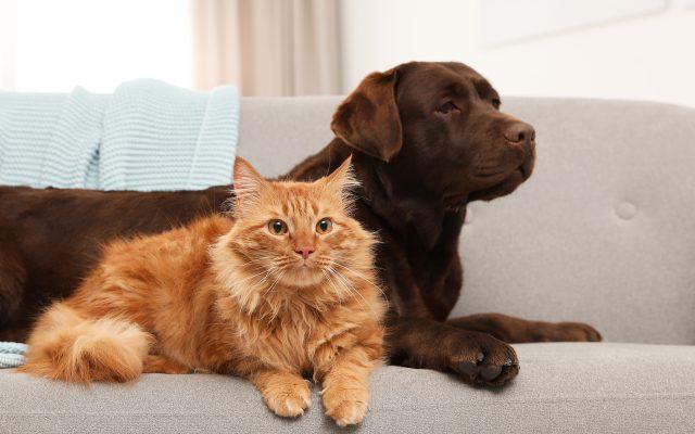 PetbleCare 寵物保險 香港 貓狗絕育好重要 手術好處 注意事項 風險
