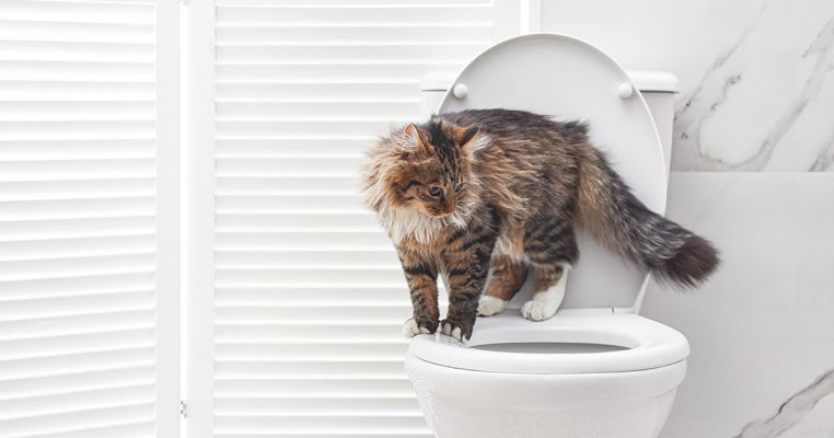 PetbleCare 貓貓 為何貓貓愛喝馬桶水