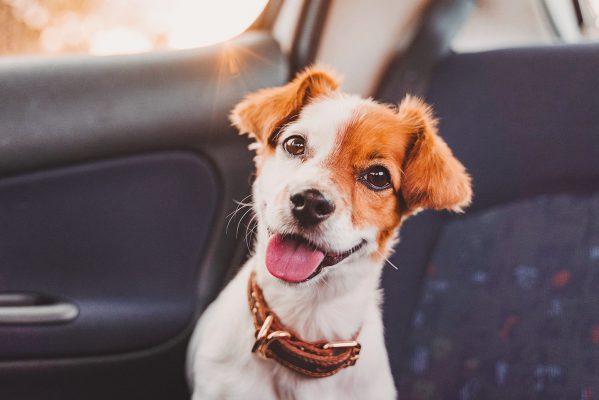 【寵物保險】投保前有咩要準備同了解?